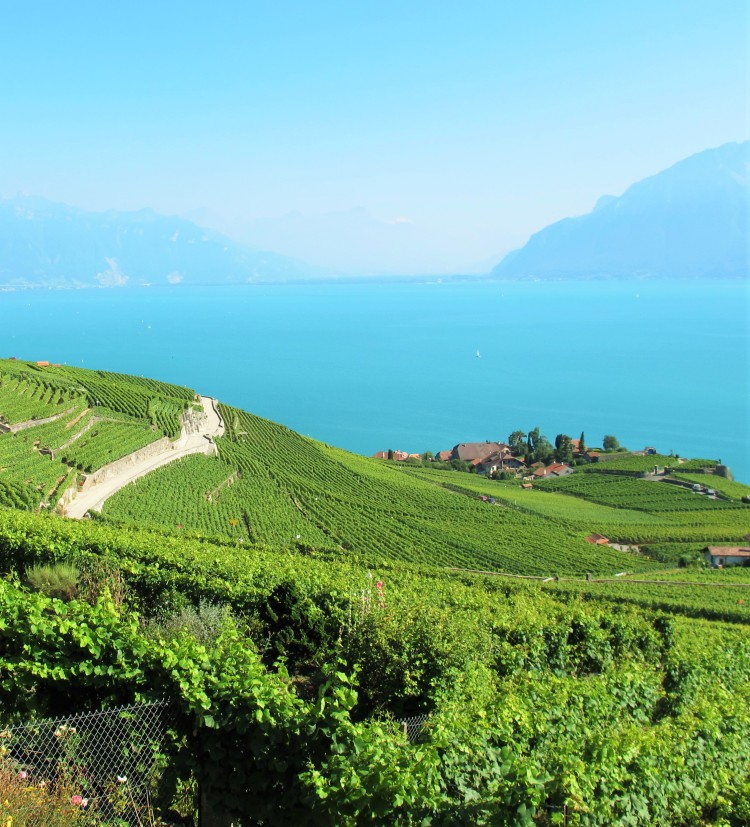 The picturesque vinyards of the Valais region in Switzerland border Lake Geneva and feature mountains, rolling hills, and small villages